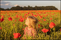 BNPS.co.uk (01202)558833<br /> Pic: Rachel Baker/BNPS<br /> <br /> At the going down of the sun...<br /> <br /> Georgia Baker, 9, taking in a poppy field near Wimborne, Dorset, at sunset at the end of a week commemorating the 75th anniversary of D-Day.