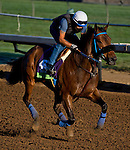 October 29, 2014:  Obviously, trained by Philip D'Amato, exercises in preparation for the Breeders' Cup Mile at Santa Anita Race Course in Arcadia, California on October 29, 2014. Scott Serio/ESW/CSM