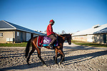 November 3, 2020: The Lir Jet, trained by trainer Michael Bell, exercises in preparation for the Breeders' Cup Juvenile Turf at Keeneland Racetrack in Lexington, Kentucky on November 3, 2020. Alex Evers/Eclipse Sportswire/Breeders Cup