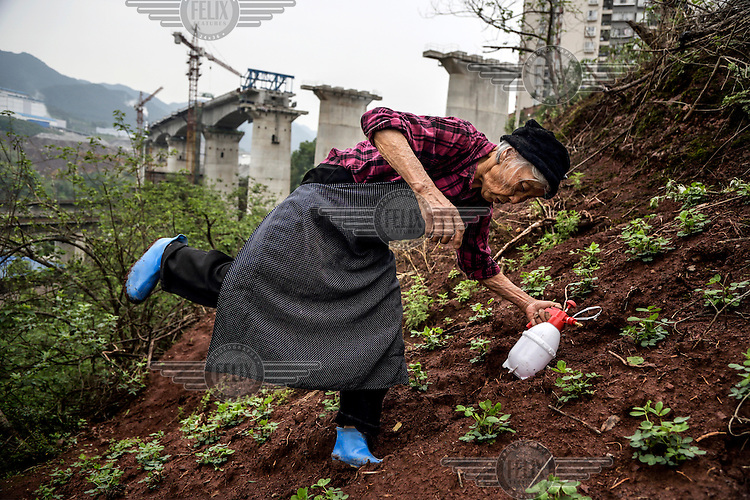 A 79 year old unidentified former farmer ekes out a living as a new urbanite by growing vegetables under a new bridge on land that has been claimed by the government to build relocation housing project in the southwestern Chinese megapolis of Chongqing. She and her neigbours were all moved from their farmland and resettled nearby in a purpose-built estate. Some bemoan the poor relocation compensation but others are happy to enjoy a social life away from the burden of farming. The Chinese government plans to move 250 million rural residents into urban areas over the coming dozen years though it is unclear whether people want to move and where the money for this project will come from. Further urbanisation is meant to drive up consumption to counterbalance an export orientated economy and end subsistence farming but the drive to get people off the land is causing tens of thousands of protests each year. /Felix Features