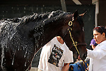 LOUISVILLE, KY - MAY 02:  Mor Spirit (Eskendereya x Im a Dixie Girl, by Dixie Union) gets a bath after exercising at Churchill Downs, Louisville KY, in preparation for the Kentucky Derby. Owner Michael Lund Petersen, trainer Bob Baffert.(Photo by Mary M. Meek/Eclipse Sportswire/Getty Images)