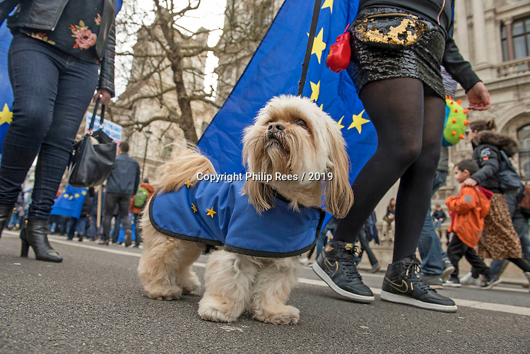 "A protester with her dog dressed in the European flag walks through Westminster during the ""Put it to the People"" rally which made it's way through central London today. Demonstrators from across the country gathered to call for a second referendum on Brexit and to march through the UK capital finishing with speeches in Parliament Square opposite the Houses of Parliament in Westminster."