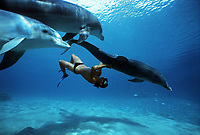 Dolphin trainer interacts Bottlenose Dolphins, Tursiops truncatus, Dolphin Reef, Eilat, Israel, Red Sea.