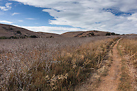 In October 2014, the view from the narrow dirt Muskrat Trail at Coyote Hills Regional Park is drought brown:  brown grass, brown hills, brown dirt.  All under a cloud streaked blue sky.