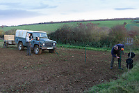 23.11.2020 Moving electric fencing before moving ewes on to sugar beet tops<br /> ©Tim Scrivener Photographer 07850 303986<br />      ....Covering Agriculture In The UK....