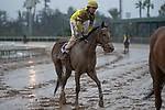 ARCADIA, CA  MARCH 10: A very muddy #3 Curlin Road, ridden by Tyler Baze, after the Santa Anita Handicap (Grade l) on March 10, 2018, at Santa Anita Park in Arcadia, CA. (Photo by Casey Phillips/ Eclipse Sportswire/ Getty Images)