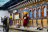 Courtyard and living quarters of Buddhist monk at Tango Goemba, Bhutan. The horse transports food and other supplies up the steep mountain to the monastery, meanwhile the sleeping dogs shelter from the rain.