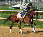 April 23, 2014 Unbridled Forever, ridden by Pedro Velez, gallops at Churchill Downs.  She is a Kentucky Oaks contender trained by Dallas Stewart and owned by Charles E. Fipke.  She was third in the Fair Grounds Oaks.