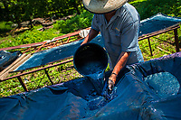 Miguel Ventura, a Salvadoran natural indigo producer, pours liquid indigo solution onto a cloth sheet to filter out the water at the semi-industrial manufacture near San Miguel, El Salvador, 12 November 2016. For centuries, indigo, a natural deep blue dye extracted from the leaves of tropical plants (Indigofera), has been known to the native indigenous inhabitants of Central America who used the blue tincture to color their fabrics and pottery. Although demand for natural indigo dropped significantly at the end of 19th century when a synthetic indigo was firstly introduced, commercialization of natural indigo has risen again during the last decades. Small-scale indigo farms, processing the crop on sustainable and ecological basis, are growing throughout the country, returning El Salvador to the place of the main natural indigo producer in Latin America.