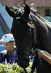 09 September 19: Ernfold prior to the grade 3 Natalma Stakes for two year old fillies at Woodbine Racetrack in Rexdale, Ontario.