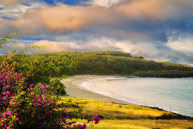 Beach at Four Seasons with Bougainvillea flowers. Lanai, Hawaii.