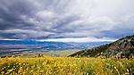Yellowstone Park and Grand Tetons Jackson Wyoming