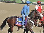 Next Question, trained by Michael Trombetta,exercises in preparation for the upcoming Breeders Cup at Santa Anita Park on October 31, 2012.