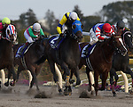 Grape Brandy wins the February Stakes at Tokyo Racecourse on February 17th, 2013.