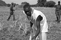 Rajaf East Prison Farm is being supported by UNDP South Sudan. Food insecurity and living conditions of prisoners are main concerns at Juba Central Prison where more than 1.200 prisoners are based. UNDP provides farming activities for selected prisoners to achieve food sustainability and self sufficiency of prisoners. Prisoner doing field work at the farm.