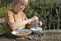 Kind, Junge reibt gesammelte Haselnüsse mit einer Nussmühle, macht aus Haselnüssen eine eigene Nuss-Schoko-Creme, (Nutella), Hasel, Ernte, reife Nüsse Haselnuß, Haselnuss, Früchte, Nuß, Nuss, Corylus avellana, Cob, Hazel, Coudrier, Noisetier commun