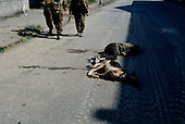 Sukhumi, Abkhazia<br /> September 28, 1993<br /> <br /> The dead lay in the streets near the Parliament build. Only Abkhazian separatists roam the streets after they captured the city center the evening before.