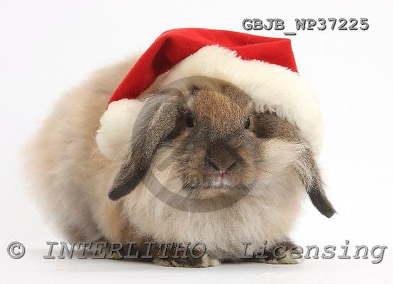 Kim, CHRISTMAS ANIMALS, photos, GBJBWP37225,#XA# stickers