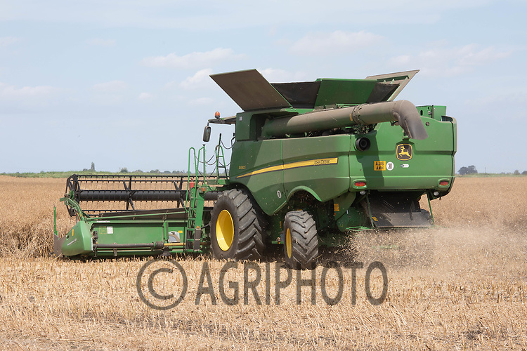 Harvesting oilseed rape in South Lincolnshire<br /> ©Tim Scrivener Photographer 07850 303986<br />      ....Covering Agriculture In The UK....