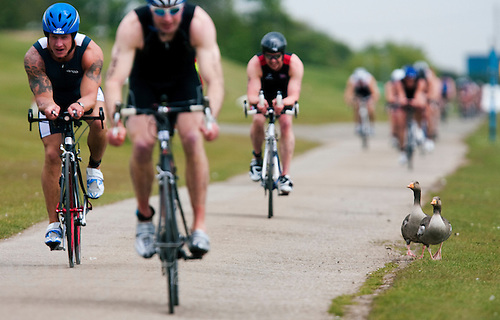 14 MAY 2010 - HOLME PIERREPONT, GBR - Geese watch as competitors cycle round the lake during the VUE National Emergency Services Triathlon Championships (PHOTO (C) NIGEL FARROW)