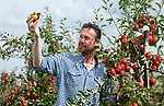 Preparing for the apple harvest at Leckford Estate in Hampshire