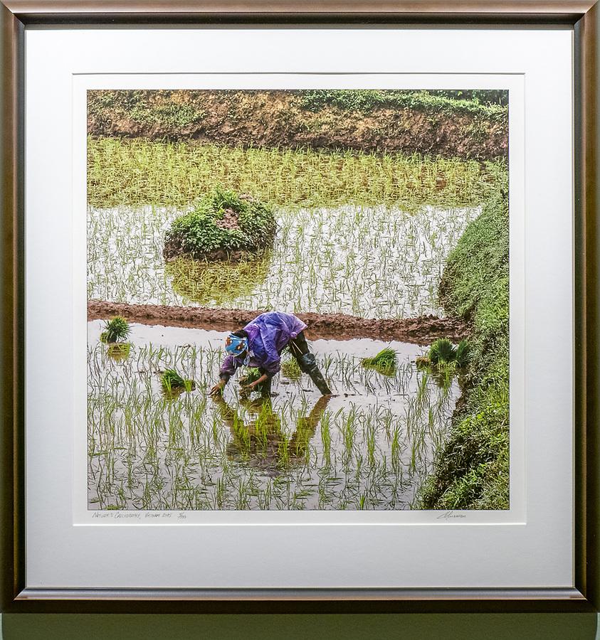 "Framed Size 22.5""h x 22""w, $725. Kona wood frame and non-glare glazing"