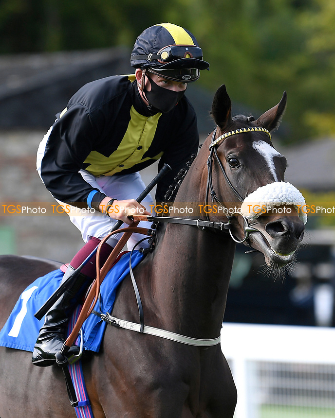 Bashful ridden by Rob Hornby goes down to the start of The Radcliffe & Co Novice Median Auction Stakes (Div 2) during Horse Racing at Salisbury Racecourse on 11th September 2020