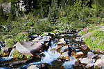Wildflowers line the Paradise River in late summer as it tumbles from Mazama Ridge,  along the Skyline Trail in Mt. Rainier National Park.