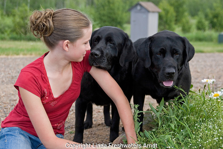 Black Labrador retrievers (AKC) doing their best to interfere with a 13 year old girl gardening.  Summer.  Winter, WI.