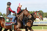 September 19, 2014: Cotillion contender Little Alexis exercises on the track the day before the race at Parx Racing in Bensalem, PA  ©Joan Fairman Kanes/ESW/CSM