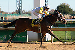 November 14, 2015 Northwest Tale (Junior Alvarado) wins the 5th race at Churchill Downs, a 6 furlong race for 2 year old fillies. Owner Charles Fipke, trainer Dallas Stewart. By Tale of Ekati x Northwest Colors (Broad Brush) ©Mary M. Meek/ESW/CSM