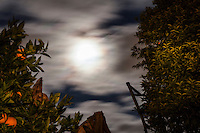 Framed by orange and kumquat trees, the Full Wolf Moon lilluminates passing clouds in a slow shutter capture.