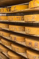Europe/Allemagne/Bade-Würrtemberg/Forêt Noire/Münstertal: Affinage des fromages de montagne: Bergkäse dans la fromagerie de Hans Jorg Fuchs à l'Hôtel  Spielweg
