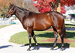 08 November  2009 Keeneland November sale.  Hip #225 Intangaroo consigned by Adena Springs.  Earner of over $600,000 on the racetrack, she is carrying her first foal who is by top young stallion, Medaglia d'Oro.