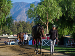 October 26, 2014: Scenes from around the track as horses exercise in preparation for the Breeders' Cup at Santa Anita Race Course in Arcadia, California on October 26, 2014. John Voorhees/ESW/CSM