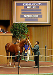September 14, 2015: Hip 12 Union Rags - Val Marie colt consigned by Summerfield.  Candice Chavez/ESW/CSM