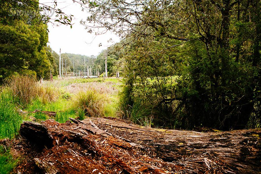 Image Ref: CA608<br /> Location: Lake Elizabeth, Forrest<br /> Date of Shot: 20.10.18