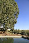 Ein Deir Aziz in the Golan Heights