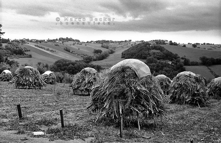 Campagna nei pressi di Ancona --- Countryside near Ancona