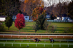 October 31, 2020: Campanelle, and Outadore,  trained by trainer Wesley A. Ward, exercises in preparation for the Breeders' Cup at Keeneland Racetrack in Lexington, Kentucky on October 31, 2020. Alex Evers/Eclipse Sportswire/Breeders Cup
