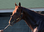 May 08, 2015  Dortmund returned to galloping at Churchill Downs following his third place finish in the 2015 Kentucky Derby.  He was ridden by his exercise rider Dana Barnes.  He is pointed toward the Preakness Stakes at Pimlico on May 16. Owner Kaleem Shah, trainer Bob Baffert. By Big Brown x Our Josephina  (Tale of the Cat.) ©Mary M. Meek/ESW/CSM