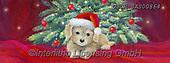 ,CHRISTMAS ANIMALS, WEIHNACHTEN TIERE, NAVIDAD ANIMALES, paintings+++++,USCRSAS00864,#xa#