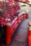 Beautiful autumn scenery of maple tree leaves and a vermilion red arched Japanese bridge in a garden in Kyoto, Japan Image © MaximImages, License at https://www.maximimages.com