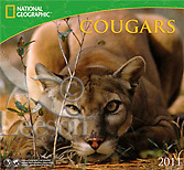 Products-National-Geographic-Cougars