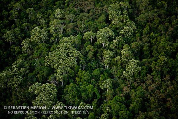 Vue aérienne de la forêt du Pic Jacob, région de Dumbéa