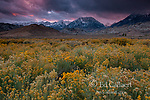 Storm Clouds, Rabbitbrush, The Buttermilks, Mount Humphries, Basin Mountain, Mount Tom, Bishop Creek National Recreation Area, Inyo National Forest, California