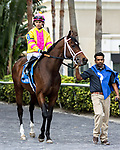 HALLANDALE BEACH, FL - JAN 06: Piven #3 is led from the paddock to the track with Jose L.  Ortiz on board prior to winning The $75,000 Limehouse Stakes for trainer Kevin Attard at Gulfstream Park on January 6, 2018 in Hallandale Beach, Florida. (Photo by Bob Aaron/Eclipse Sportswire/Getty Images)