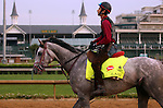 LOUISVILLE, KY - APRIL 19: Lani (Tapit x Heavenly Romance, by Sunday Silence) heads back to the barn after galloping two miles at Churchill Downs, Louisville KY.Owner Ms. Yoko Maeda, trainer Mikio Matsunaga. (Photo by Mary M. Meek/Eclipse Sportswire/Getty Images)