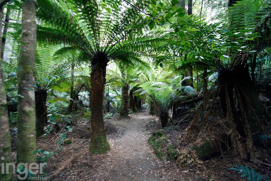 A Walk through the Tree Ferns of Bruny Island, Tasmania