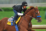 25 April 2010: Line Of David with exercise rider Lupillo Alferez up  on the track in preparation for Saturday's Kentucky Derby at Churchill Downs in Louisville, Kentucky.